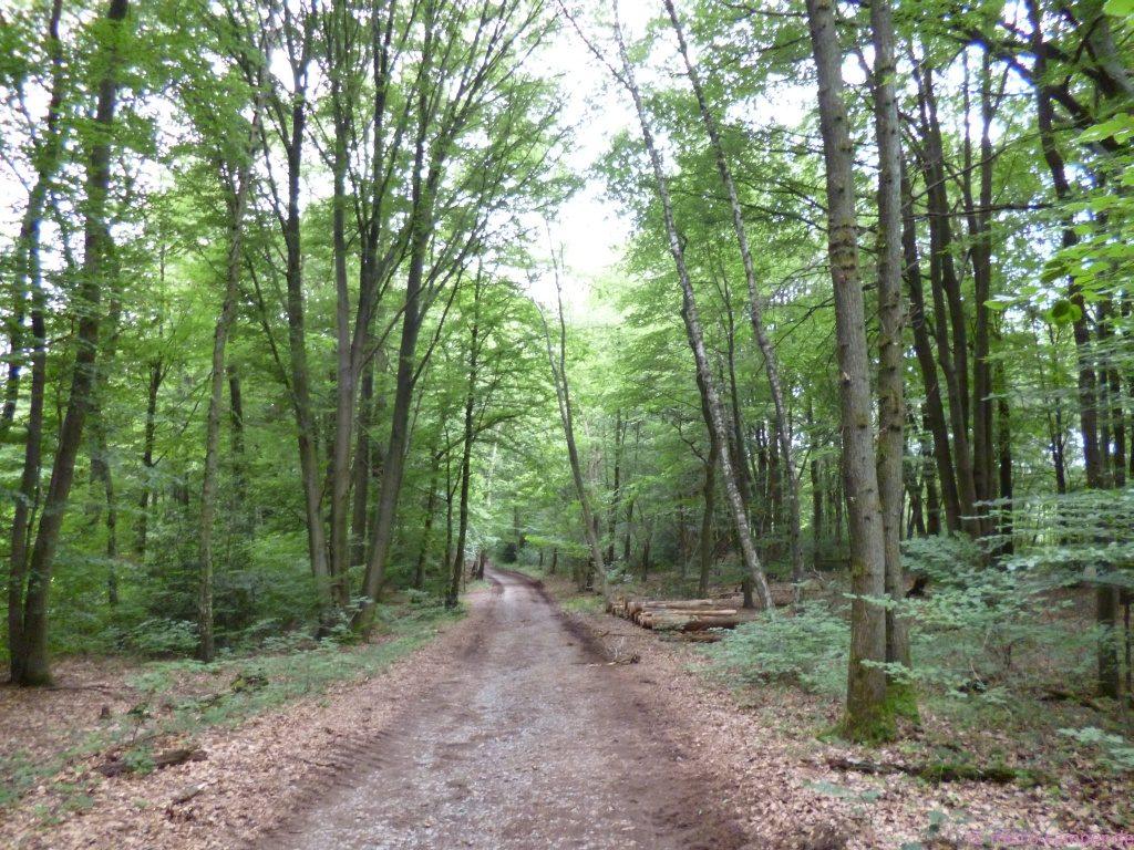 mal durch schönen Wald ...