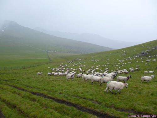 Während des Laufens höre ich immer wieder leise die kleinen Glocken läuten, die einige Tiere um den Hals tragen