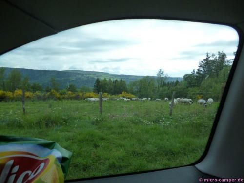 Schafe (mit Glöckchen) sind in diesem Urlaub irgendwie immer in der Nähe