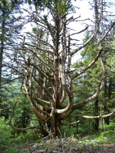 Was bringt einen Baum dazu, so zu wachsen?