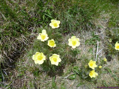 Diese gelben Blumen gefallen mir besonders