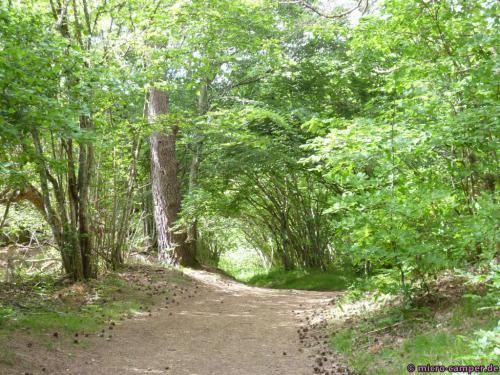 Zunächst gemächlich durch schönen Laubwald