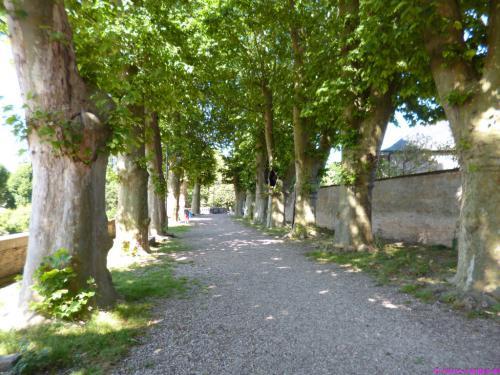 Unter Platanen auf der Stadtmauer