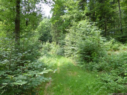 schmaler Waldpfad bei Crottorf