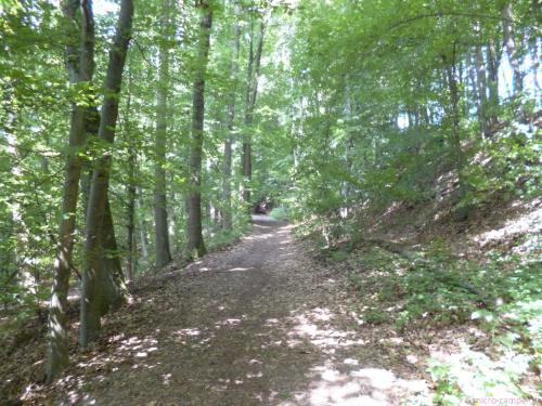 nach viel Asphalt endlich wieder Wald