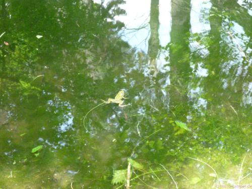 ... mit Fröschen, die bei meiner Ankunft alle erschrocken ins Wasser hüpfen