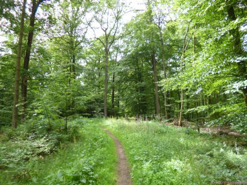 schmaler Waldpfad bei Mittelhees