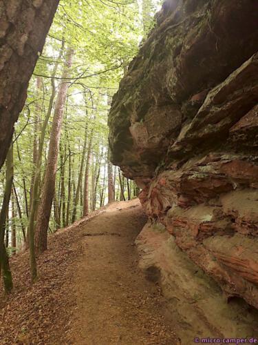Das Rot der Felsen kontrastiert toll zum Grün des Waldes