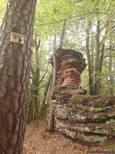 Felsen und Wald, mehr gibt es auf dieser Tour kaum - aber eben auch nicht weniger!