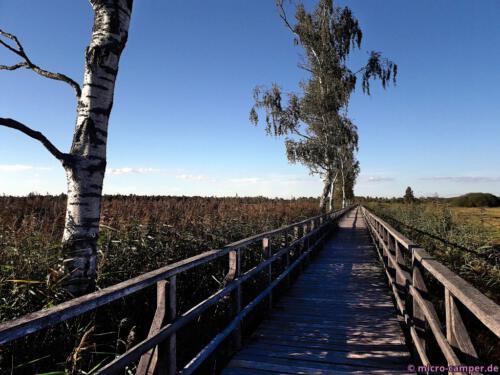 Der Steg führt einen Kilometer weit durchs Ried
