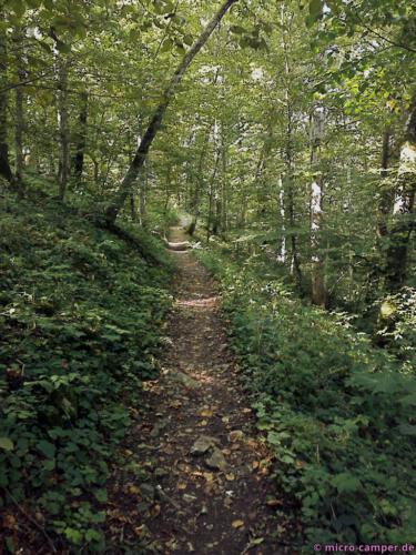 Der schattige Wald ist angenehm kühl