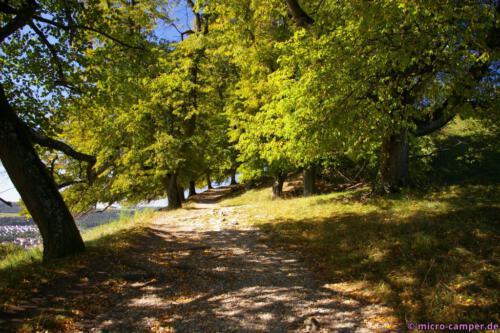 Alte Bäume säumen den Weg