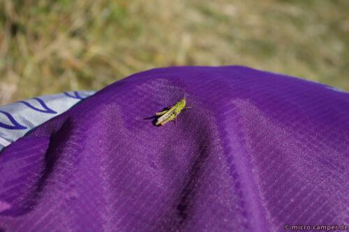 Ein Grashüpfer kontrastiert wunderschön mit meinem Rucksack