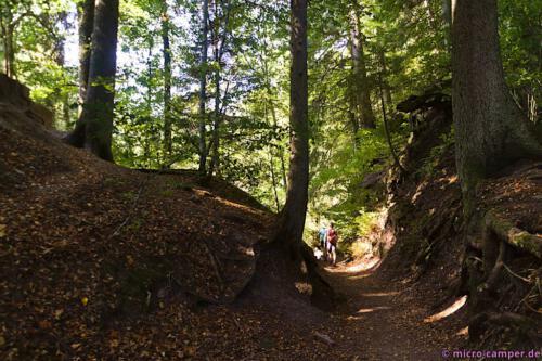 Gegen Ende nochmals schönster Laubwald sowie später schmale Pfade, hoch und runter