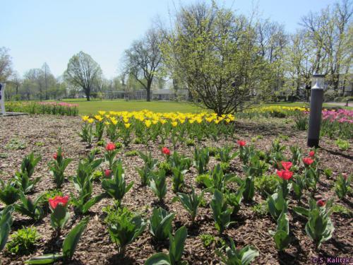 Die ersten Frühlingsboten grüßen mit bunten Farben